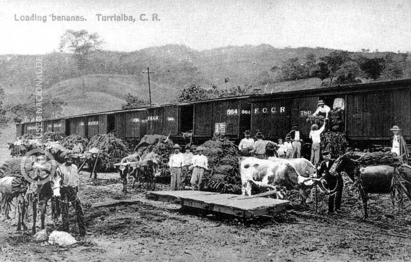 Musa Paradisiaca Historia Del Banano En Costa Rica